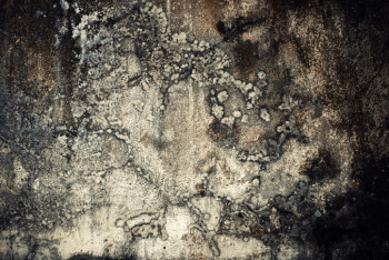Mold spores cause problems